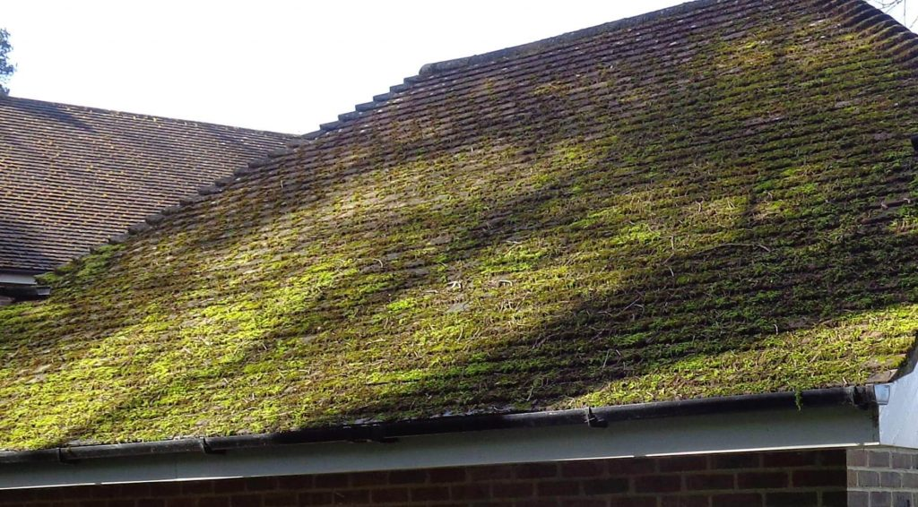 Moss removal service, before